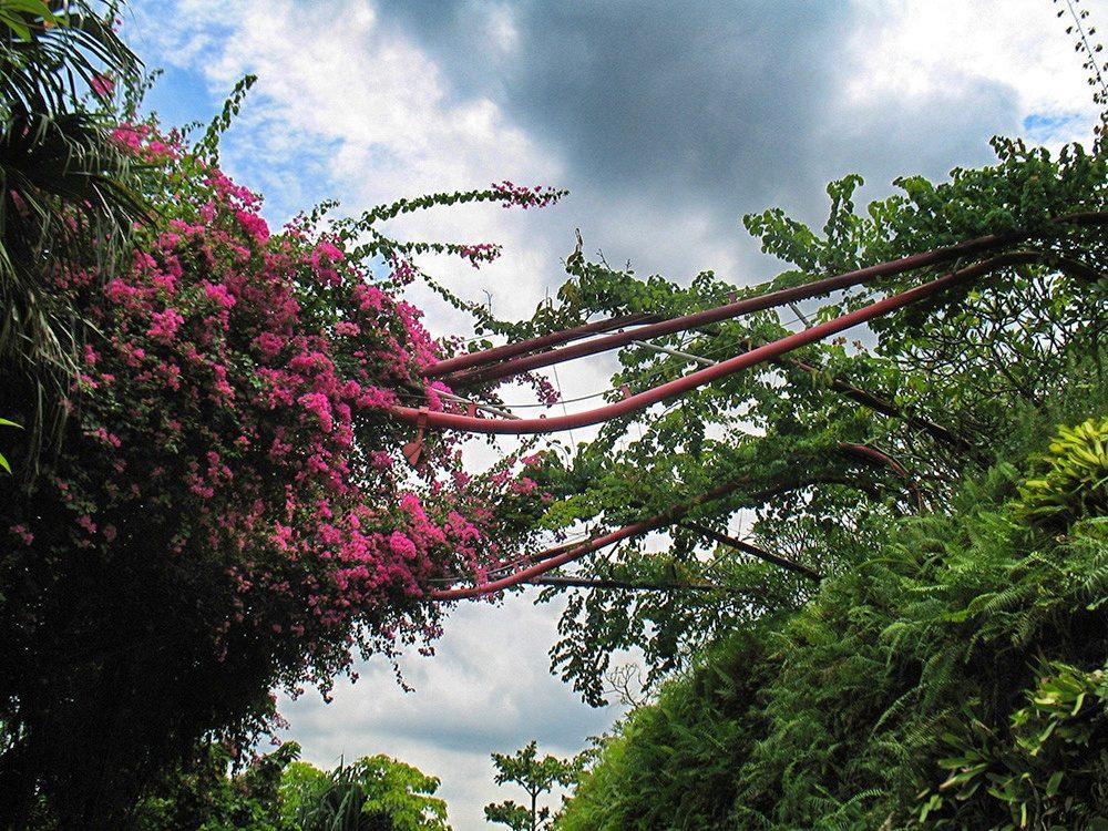 Q botanic (7)