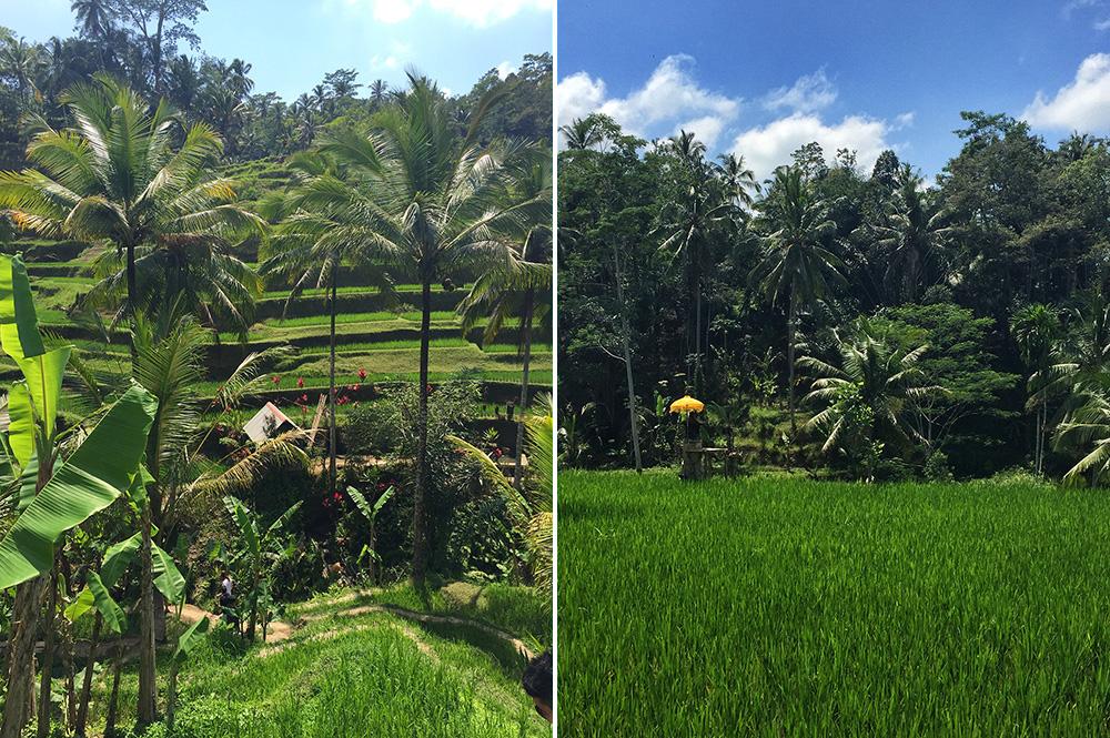 Bali_10-Tegallalang  RiceTerraces (3)