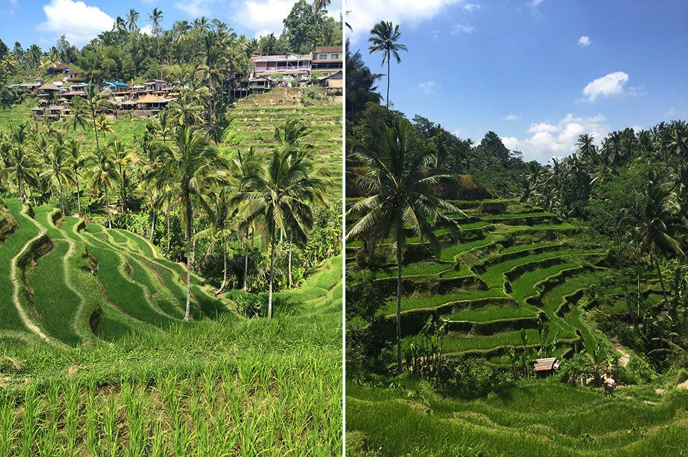 Bali_10-Tegallalang  RiceTerraces (5)