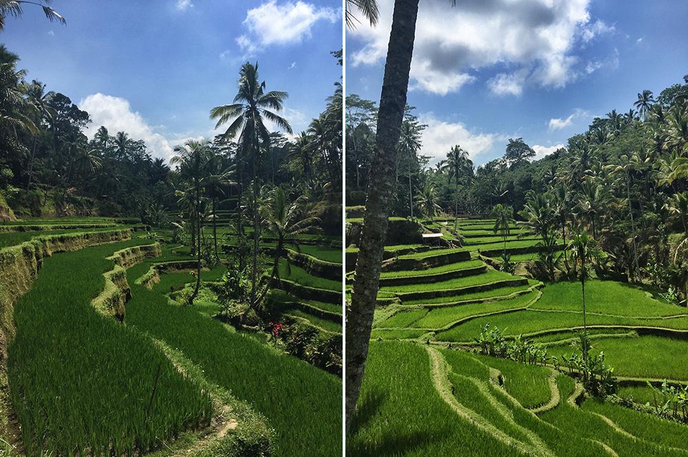 Bali_10-Tegallalang  RiceTerraces (7)