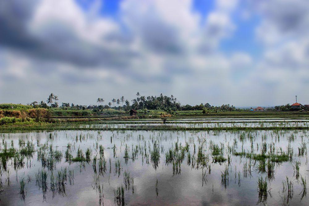 Bali_3-UlunDanu (2)