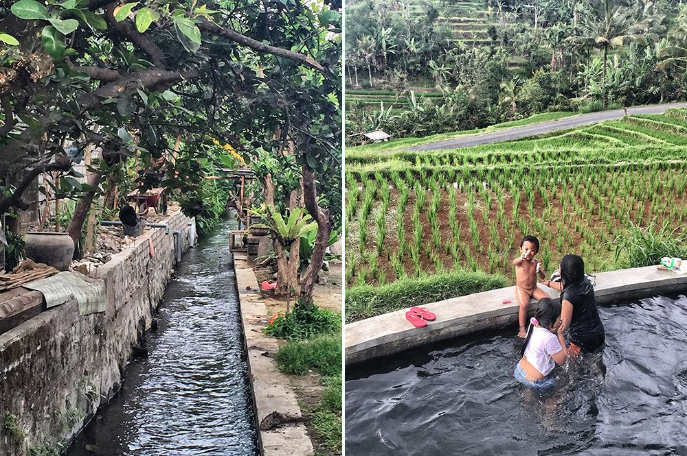 Bali_4b-Jatiluwih  (11)