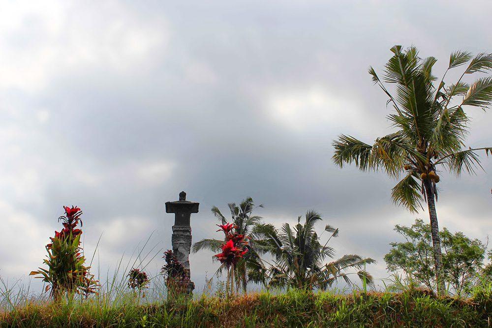 Bali_4b-Jatiluwih  (12)