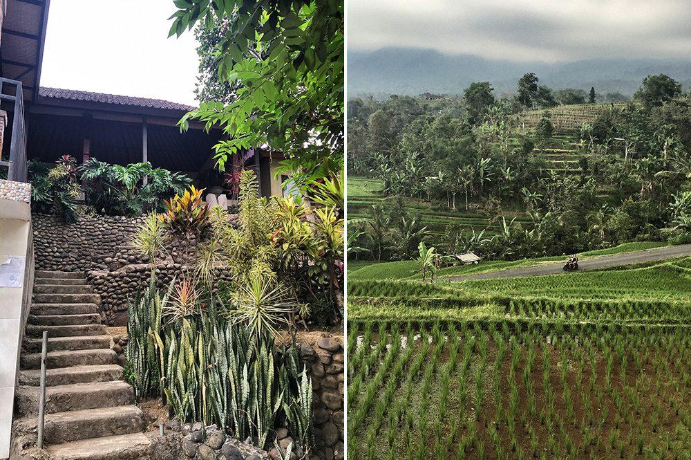 Bali_4b-Jatiluwih  (13)