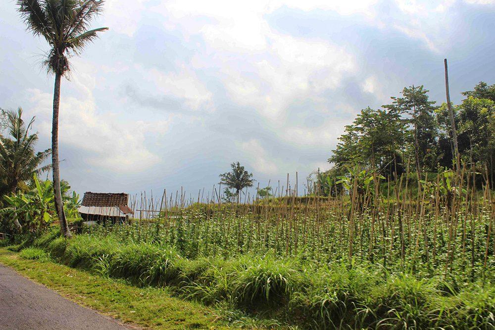 Bali_4b-Jatiluwih  (2)