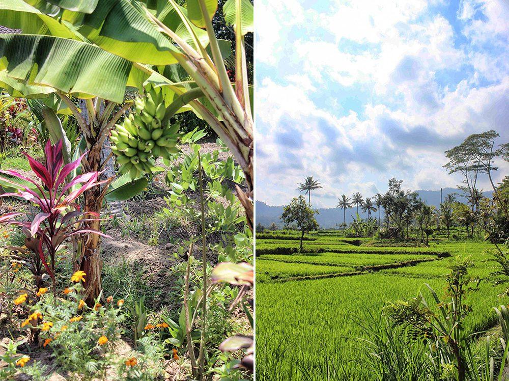 Bali_6-Sideman (16)