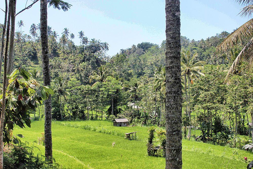 Bali_6-Sideman (5)
