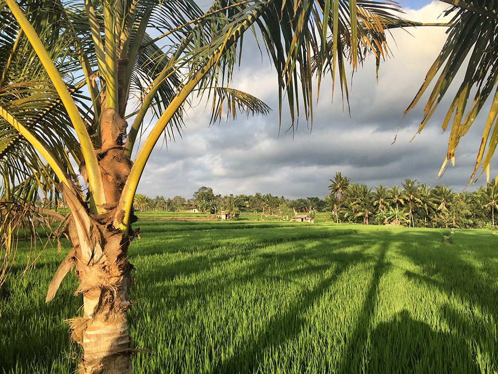 Bali_8-UbudRiceTerraces (16)