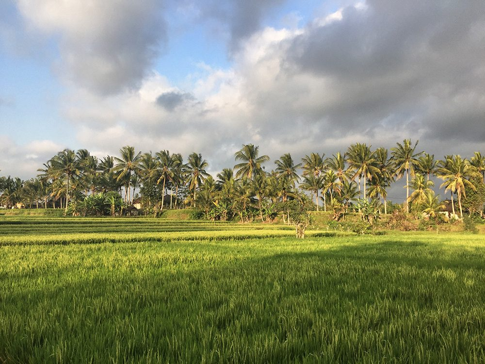 Bali_8-UbudRiceTerraces (18)
