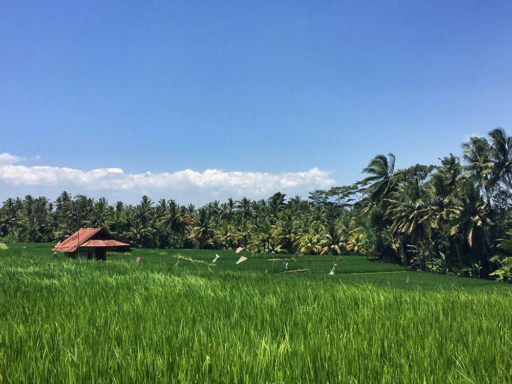 Bali_8-UbudRiceTerraces (2)