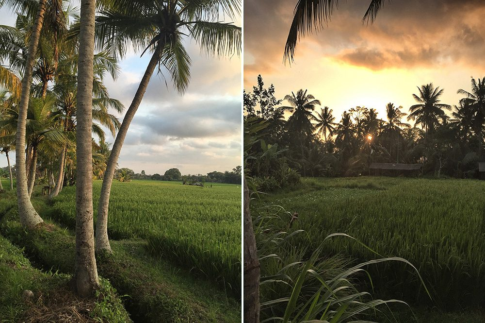 Bali_8-UbudRiceTerraces (26)