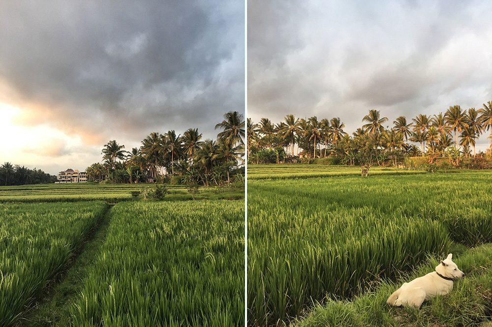 Bali_8-UbudRiceTerraces (27)