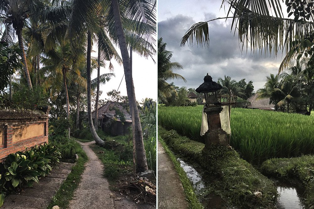 Bali_8-UbudRiceTerraces (32)