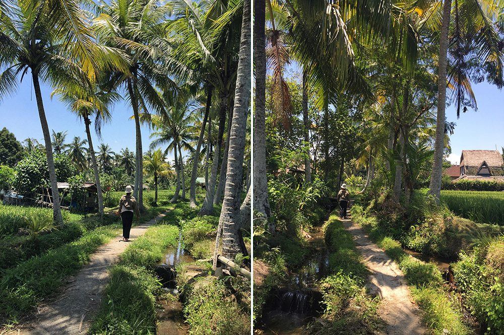 Bali_8-UbudRiceTerraces (7)