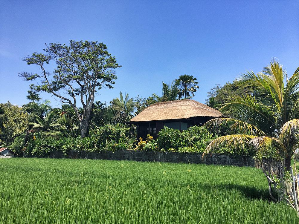 Bali_8-UbudRiceTerraces (8)