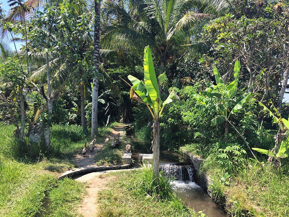 Bali_8-UbudRiceTerraces (9)