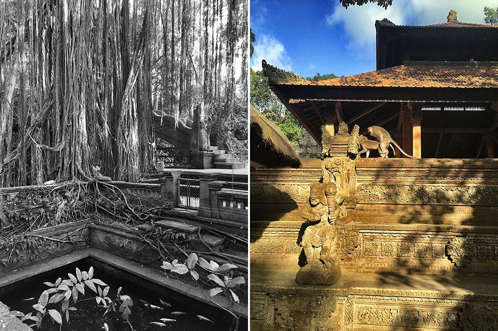 Bali_9-MonkeyForest(3)