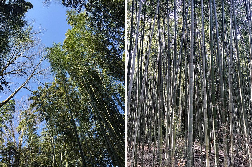 B bamboo (3)