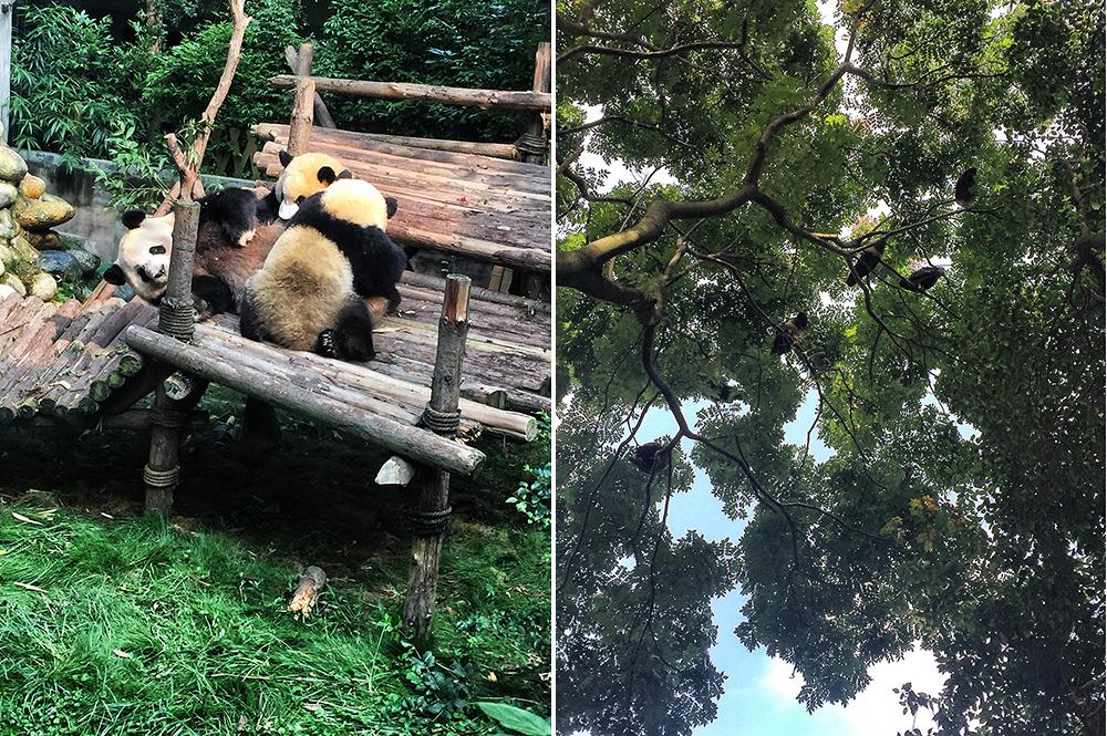 Panda (13)