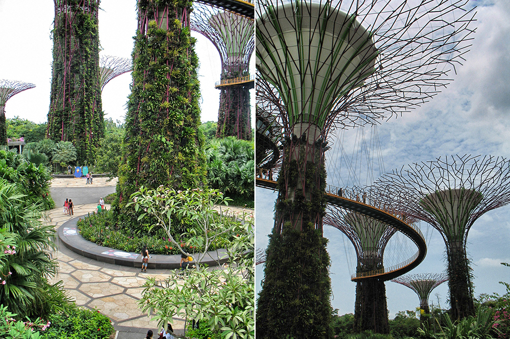 Q botanic (3)