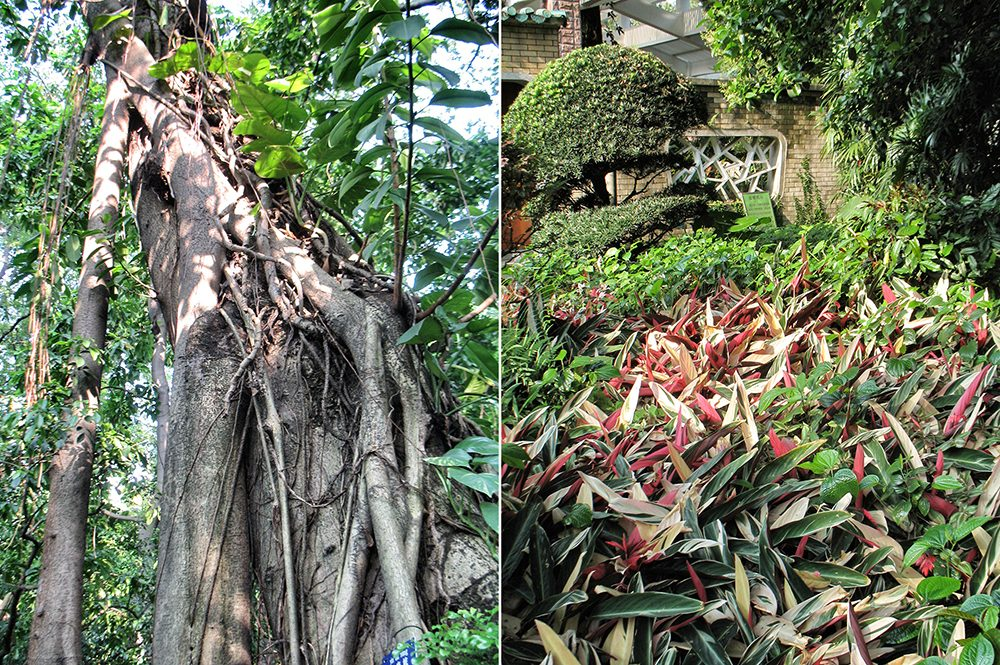 1_Garden (6)