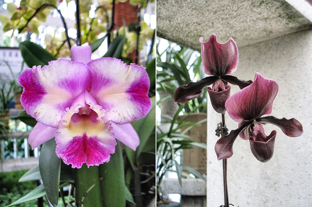 2_orchid (1)