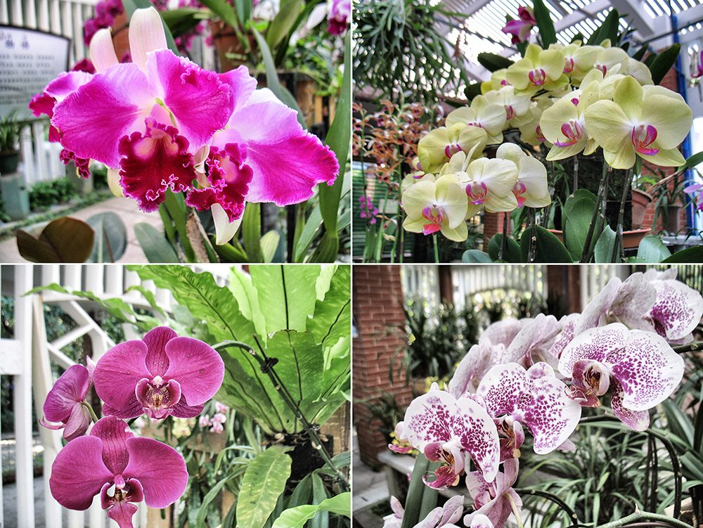 2_orchid (2)