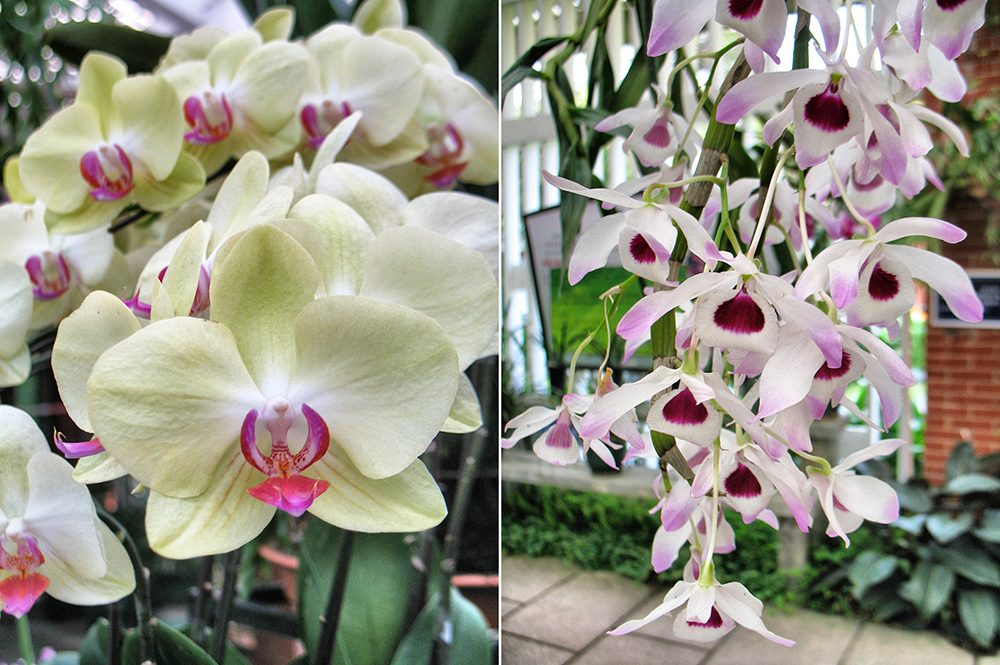 2_orchid (3)
