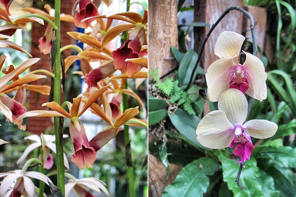 2_orchid (4)