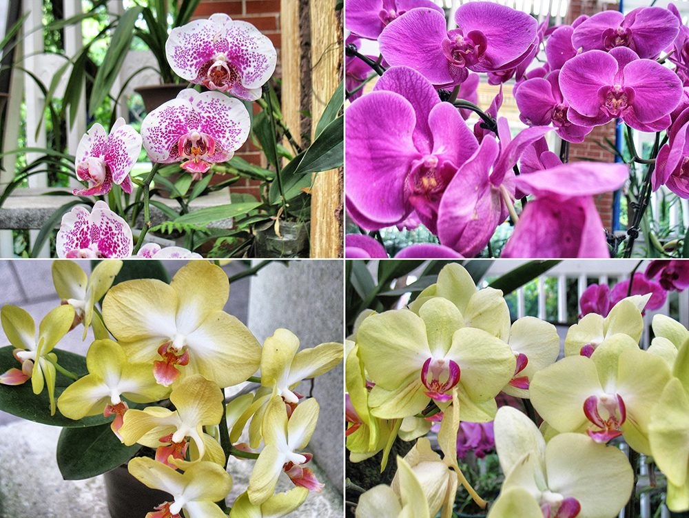 2_orchid (5)