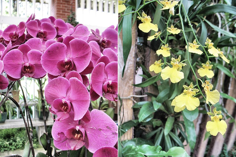 2_orchid (6)