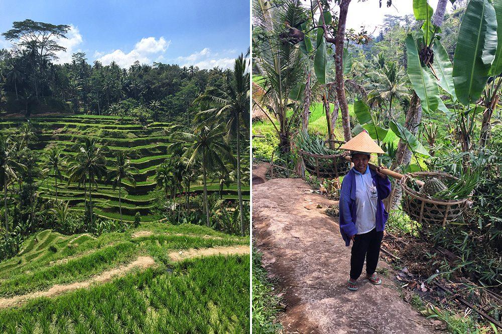 Bali_10-Tegallalang  RiceTerraces (2)