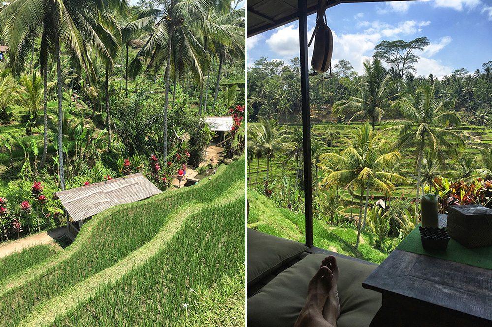 Bali_10-Tegallalang  RiceTerraces (8)