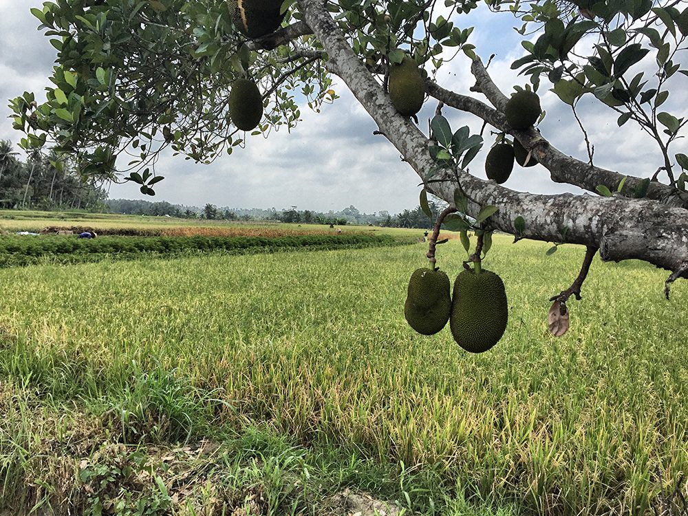 Bali_3-UlunDanu (4)