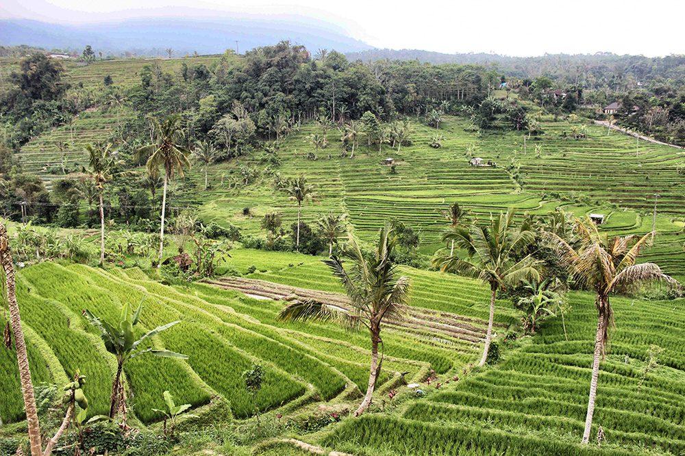 Bali_4b-Jatiluwih  (10)