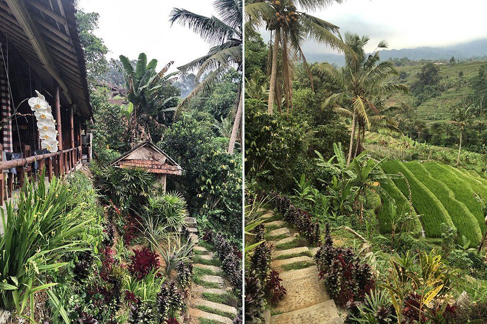 Bali_4b-Jatiluwih  (14)
