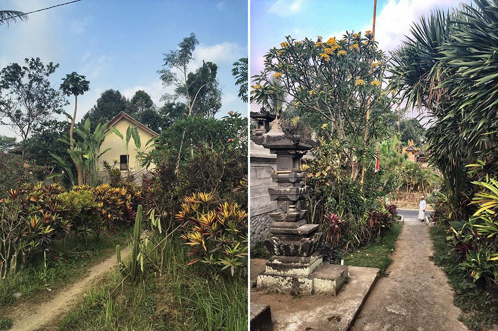 Bali_4b-Jatiluwih  (15)