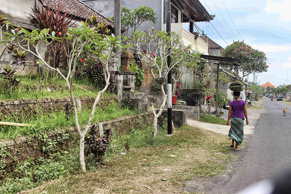 Bali_4b-Jatiluwih  (18)