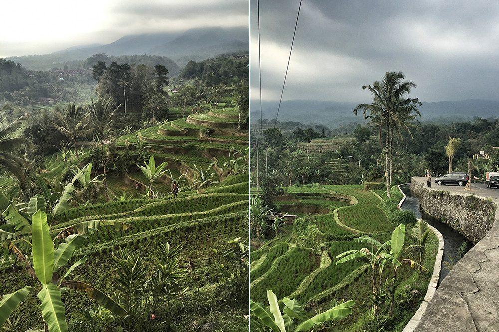 Bali_4b-Jatiluwih  (6)