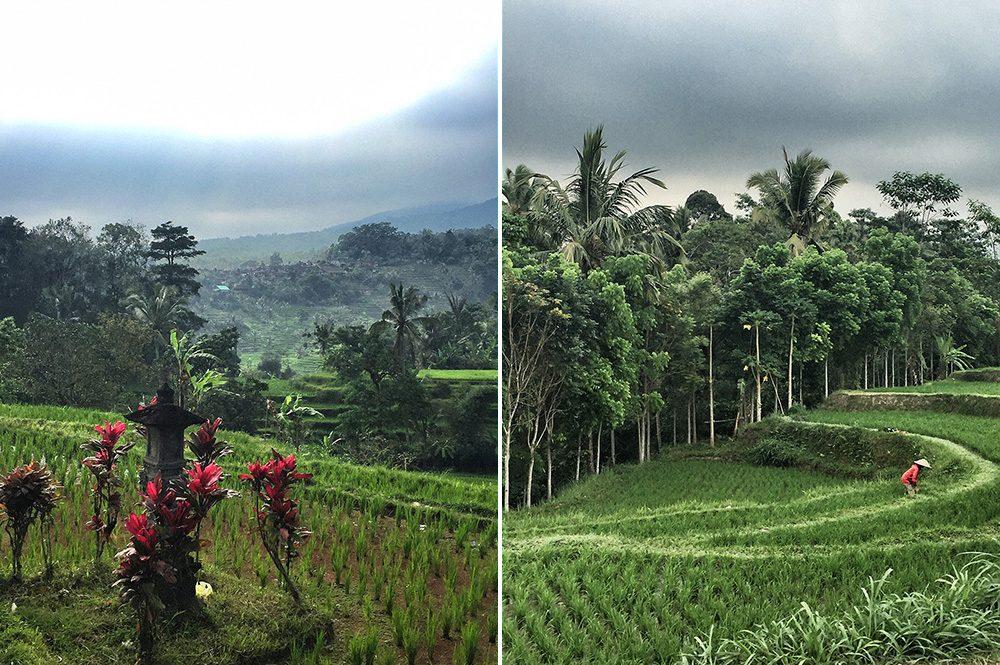 Bali_4b-Jatiluwih  (7)