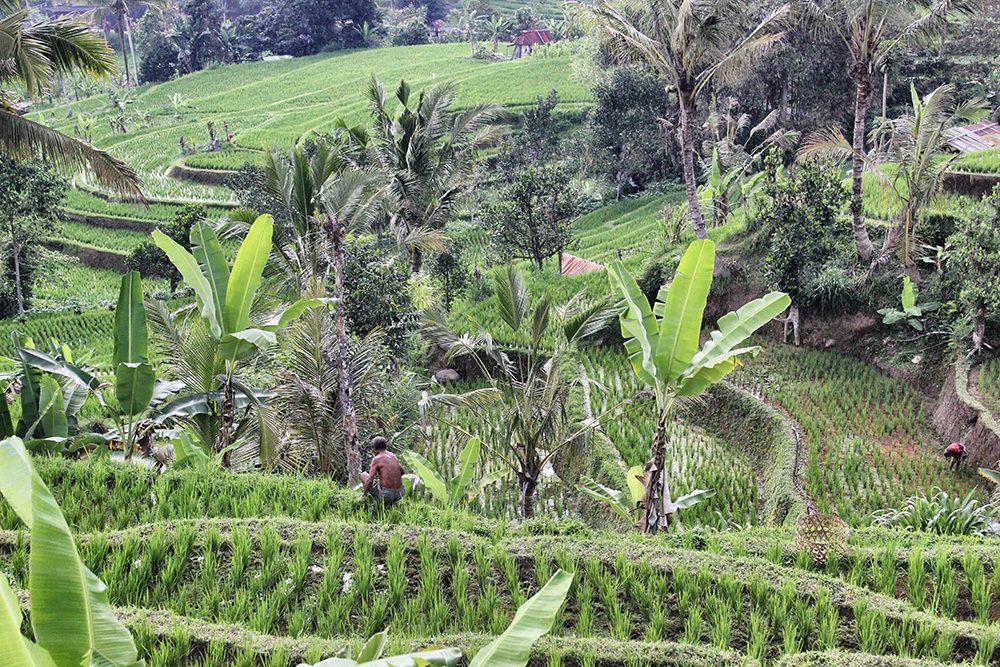 Bali_4b-Jatiluwih  (8)