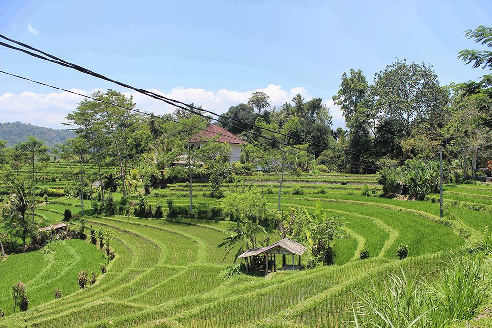 Bali_6-Sideman (18)