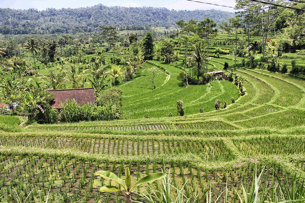 Bali_6-Sideman (19)