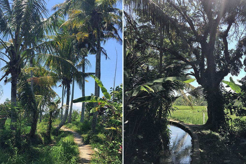 Bali_8-UbudRiceTerraces (10)
