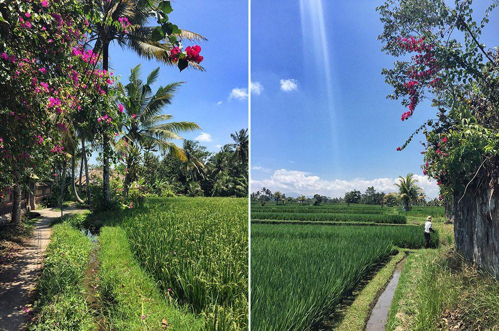 Bali_8-UbudRiceTerraces (11)