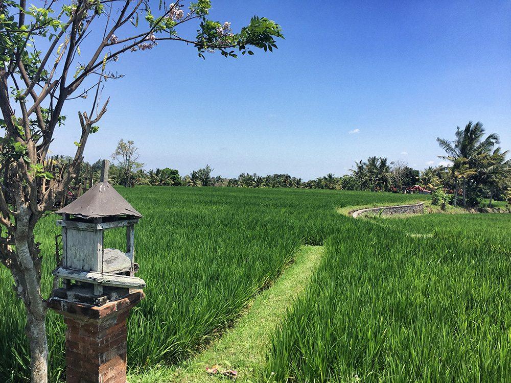 Bali_8-UbudRiceTerraces (12)