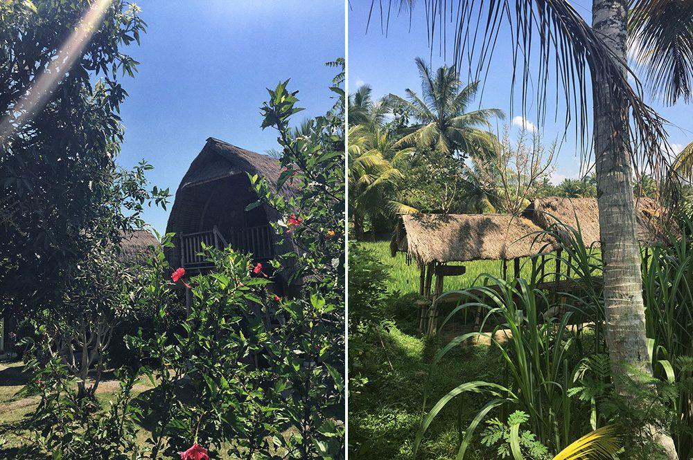 Bali_8-UbudRiceTerraces (13)