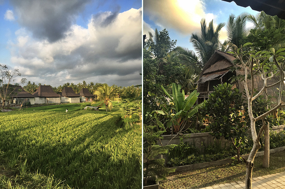Bali_8-UbudRiceTerraces (17)