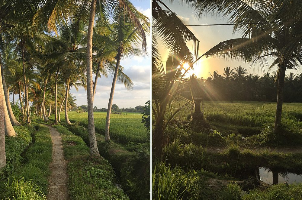 Bali_8-UbudRiceTerraces (19)