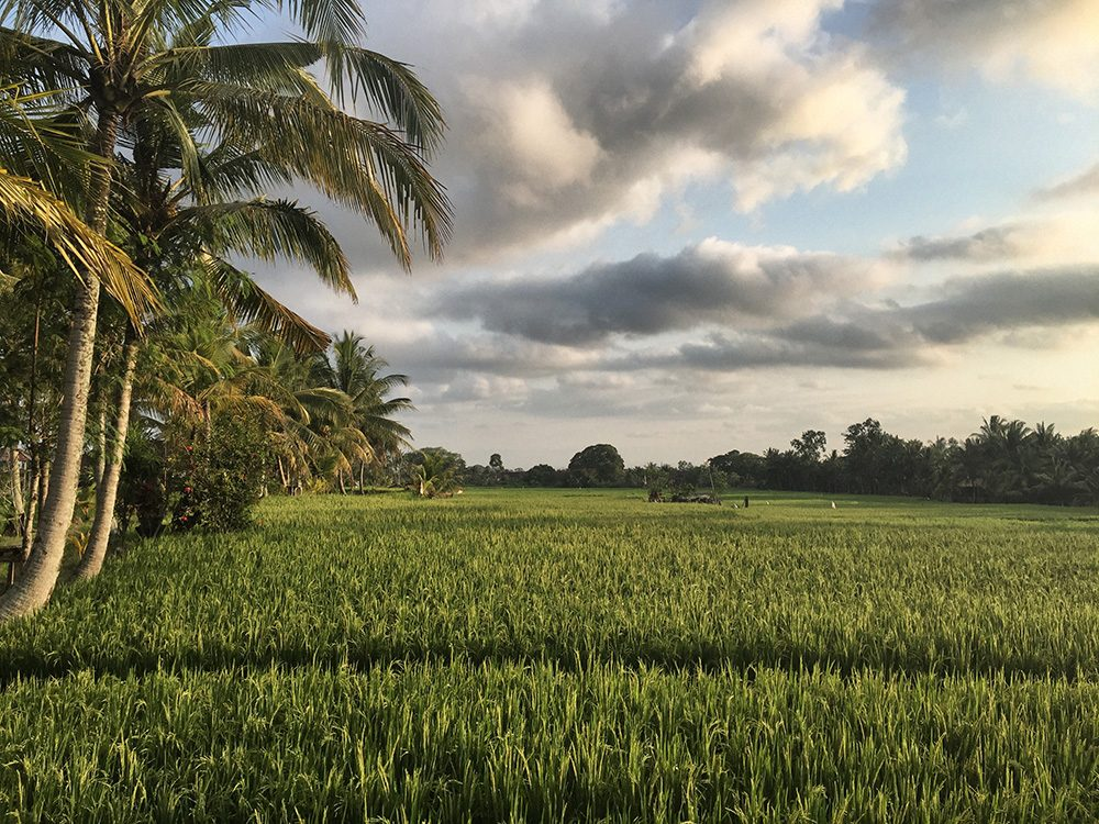 Bali_8-UbudRiceTerraces (20)